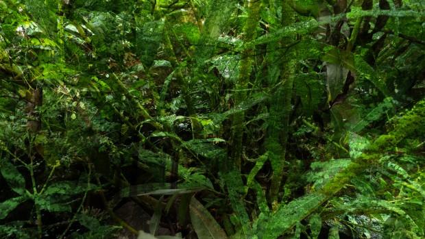 tothewoods-1 by brigitte felician siebrecht