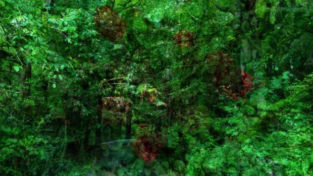 tothewoods-2 by brigitte felician siebrecht