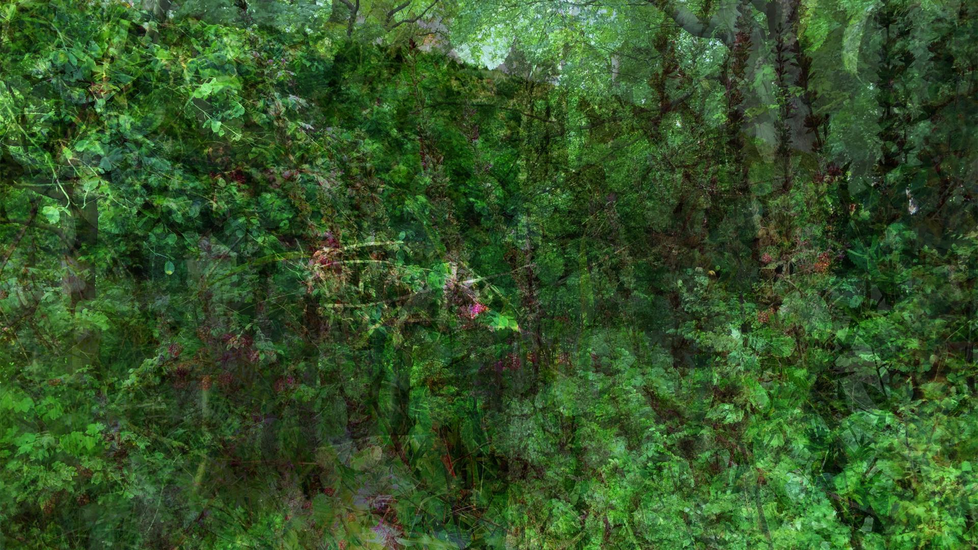 to the woods | gruen